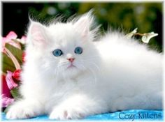 I want to snuggle with this kitty