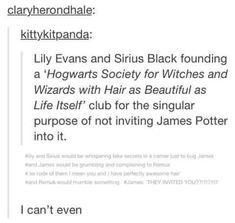 Harry Potter Feels, Harry Potter Marauders, Harry Potter Images, Harry Potter Jokes, Harry Potter Universal, Harry Potter Fandom, Harry Potter World, Harry Potter Hogwarts, The Marauders
