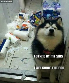 I'd Like to See You Try - World's largest collection of cat memes and other animals Funny Husky Meme, Dog Quotes Funny, Funny Animal Memes, Funny Animal Pictures, Cat Memes, Funny Images, Funny Dogs, Funny Animals, Cute Animals