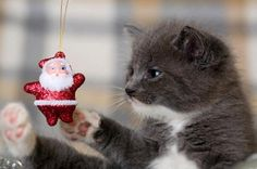 #cat #christmas #kitty retro santa. all ornaments on the tree are toys. lol.