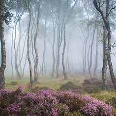 Forest of Doreni [Misty Stanton Moor, Peak District, England by Beautiful World, Beautiful Places, Beautiful Pictures, Beautiful Photos Of Nature, Nature Photos, Amazing Nature, Landscape Photography, Nature Photography, Aesthetic Photography Nature