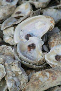 Fagers Island 11th Annual Shell Shocked Ocean City Marylands premier Oyster and Craft Beer Fall Event!