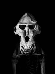 evolution-patrick-gries-16