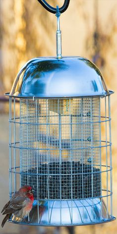 Great Gift Idea for Backyard Bird Lovers.  This Skinny Squirrel Feeder is the Best Squirrel proof feeder I've ever found.  Get yours today at:  http://stonebridge-mall.com/products/squirrel-proof-bird-feeder