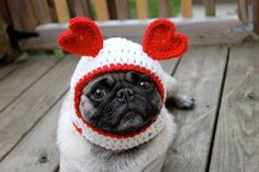 Pug dog wearing hat with hearts
