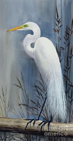 Egret Painting - Egrets Wonder by James Williamson Bird Painting Acrylic, Arches Watercolor Paper, Watercolor Paintings, Bird Paintings, Watercolors, China Painting, White Egret, Blue Heron, Beautiful Birds