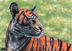 ACEO Original art animal wild cat tiger stripe miniature illustration - SMcNeill