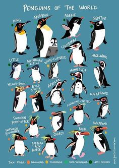 """""""Penguins of the World"""" Poster by rohanchak Storyboard, Types Of Penguins, Penguin Illustration, Penguin Love, Penguin Craft, Pet Day, Marine Biology, Animals Of The World, Animal Quotes"""