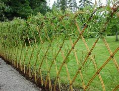 Delectable Garden fence construction,Modern fence landscaping and Fence ideas rustic. Shrubs For Privacy, Backyard Privacy, Privacy Fences, Backyard Fences, Garden Fencing, Garden Privacy, Pool Fence, Small Fence, Front Yard Fence