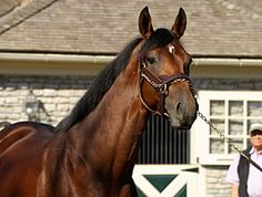 big brown horse death   Big Brown, champion of sire Boundary.