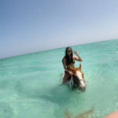 Cayman islands  #horse#horseswim#caymans#dream#yolo#lovemylife