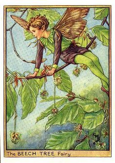 The Beech Tree Fairy. Vintage flower fairy art by Cicely Mary Barker. Taken from 'Flower Fairies of the Trees'. Click through to the link to see the accompanying poem. Cicely Mary Barker, Illustration Photo, Fantasy Illustration, Illustration Flower, Old Illustrations, Beech Tree, Fairy Pictures, Vintage Fairies, Beautiful Fairies