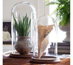 Glass Display Cloche #potterybarn