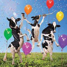 Dancing cows happy birthday
