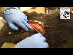 RESCATE DE PERRO APALEADO Y HERIDO CON ARMA BLANCA - AFECTO ANIMAL. - YouTube