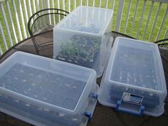 Seed starters. seed trays in a clear totes. This creates PERFECT seed starting setting. Humid, warm and light!