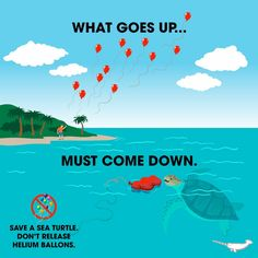 Save a sea turtle, don't release helium balloons