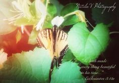 Ecclesiastes. HolyBible. NatalieVPhotography. Bible Verses of Encouragement. Find my page on Facebook. In His Time, Encouraging Bible Verses, Ecclesiastes, Plant Leaves, Encouragement, Facebook, Plants, Flora, Plant