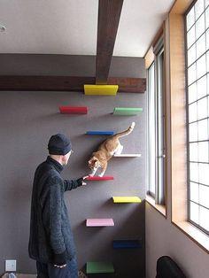 Cat Shelves ~ Love the bright color idea! ~