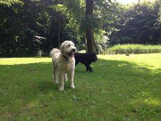 Walk at Queen Elizabeth Country Park.
