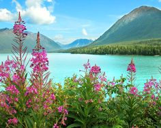 It's not an easy task to find a prettier place to take a drive (or boat, or fish!) than the beautiful Kenai Peninsula in Alaska.