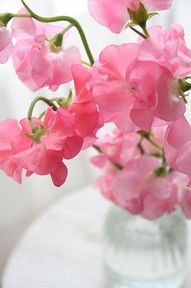 Sweet peas remind me of my grandma. They were her favorite flower. Want to plant some this year for her. :)