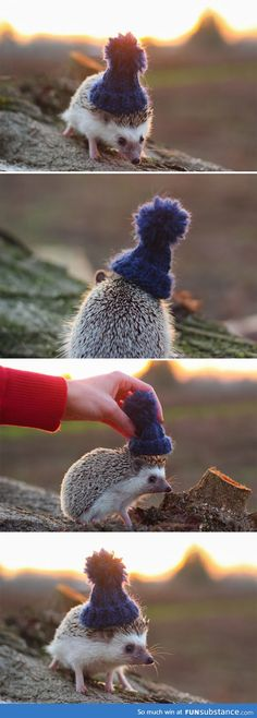 Pendleton the Hedgehog