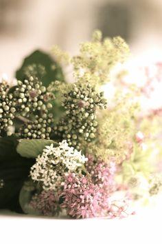 little blossoms// via mackapar.blogspot.com