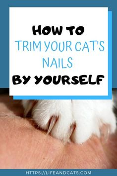 Nov 2019 - Tips to help you cut your wiggly cat's claws by yourself. Nail trims do not have to be a stressful experience for you or your cat with training and practice Trim Cat Nails, Cat Nail Clippers, First Time Cat Owner, Cat Care Tips, Pet Care, Pet Tips, Cat Health Care, Getting A Kitten, Long Haired Cats