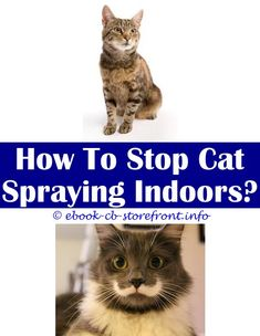10 Friendly Clever Ideas: Bestr Way To Spray Cats video cats spraying.Bengal Cats And Spraying bengal cats and spraying.How Do I Stop My Male Cat From Spraying.