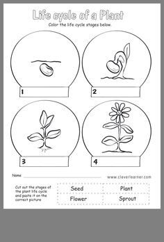 plant life cycle first grade worksheets Plant Life Cycle Worksheet, Cycle For Kids, Plant Lessons, Life Cycle Craft, Plant Crafts, First Grade Worksheets, Plant Science, Kindergarten Science, Life Cycles