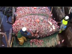 Amazing Big Fish Catching Vessel On The Sea, Big Catch Fishing Process Metal Projects, Fish, Youtube, Dark Spots, Blessings, Sausage, Blessed, Peace, Skin Care