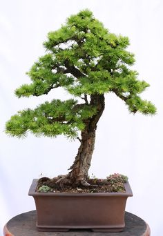Larch 5/2012 Front
