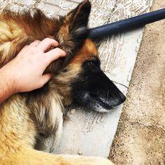 #mydog #sanson