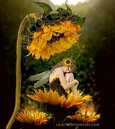Fairy and sunflowers Fairy Dust, Fairy Land, Fairy Tales, Fantasy Kunst, Fantasy Art, Fantasy Fairies, Fairy Pictures, Love Fairy, Beautiful Fairies