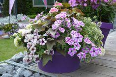 Zvezdaste petunije, krompir in beli grobeljnik Plants, Plant, Planets