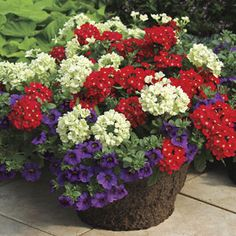 Spring Picnic Annual Plant Combination