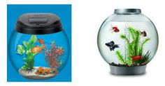 Картинки по запросу рыбки в круглом аквариуме