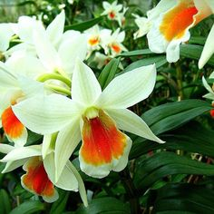 Den. Mae Dawn  #orchids #Orchidee #Orchideen #Orchideengarten #orchideeën #orkidéer #орхидеи #orquídea #orchidstagram #instaorchids #instaflowers #nature #naturelovers #instanaturelovers #orchidlovers #instagardenlovers #iloveorchids #flowers #flores #fleur #Blumen #floral #floralhub #bloom #inbloom #instabloom #instagood #orchidacea #macro #natureshot http://ift.tt/1VhsHoH