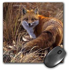 3dRose LLC 8 x 8 x 0.25 Inches Mouse Pad, Colorado Jeffer... https://www.amazon.com/dp/B00AE0K95M/ref=cm_sw_r_pi_dp_x_Z357xb3TPR1VE