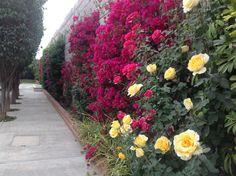 Entre Flores te veas