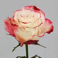 -- www.rosasdelcorazon.com