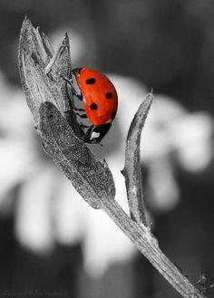 *black, white & red