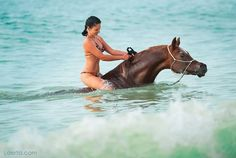 Arabian horse and rider swimming Rare Horses, Horses And Dogs, Show Horses, Woman Riding Horse, Horse Girl, Most Beautiful Horses, All The Pretty Horses, Rare Horse Breeds, Horse Movies
