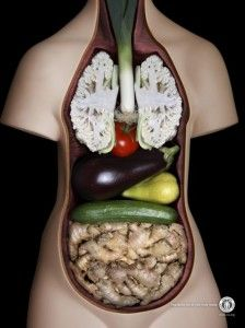 anatomy via veggies