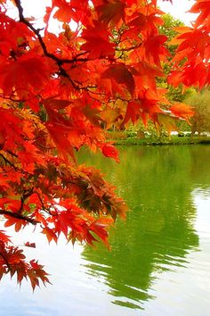 Green Pond - Autumn Leaves - I am there! Autumn Day, Autumn Leaves, Red Leaves, Maple Leaves, Falling Leaves, Autumn Summer, Green Pond, Seasons Of The Year, All Nature