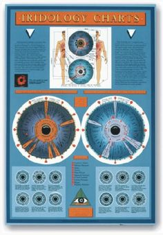 Iridology Wall Chart The iris consists of a very large number of delicate fibres, which react to the body's metabolism in a predictable pattern. This pattern is recorded in a series of iridology charts. The Iridology Wall Chart offers a ready introduction to this rich science.  Click on the picture below for an enlarged sample from the chart to better view quality and information presented.