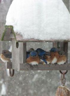- snow birds in the winter garden-