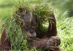 Camouflage! (photo by Olga Shiropaeva)