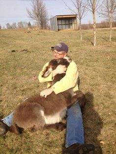 This dad cuddling family donkey. - Donkeys make great pets they live for years in developed countries ~ sweet that he cares! I have seen such sad donkeys living alone in a big field. Be kind have at least 2 of a kind. Cute Donkey, Mini Donkey, Baby Donkey, Farm Animals, Animals And Pets, Cute Animals, Wild Animals, Beautiful Horses, Animals Beautiful